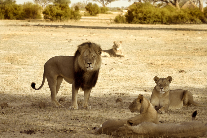 Crisis PR: Cecil the lion – social media unites us